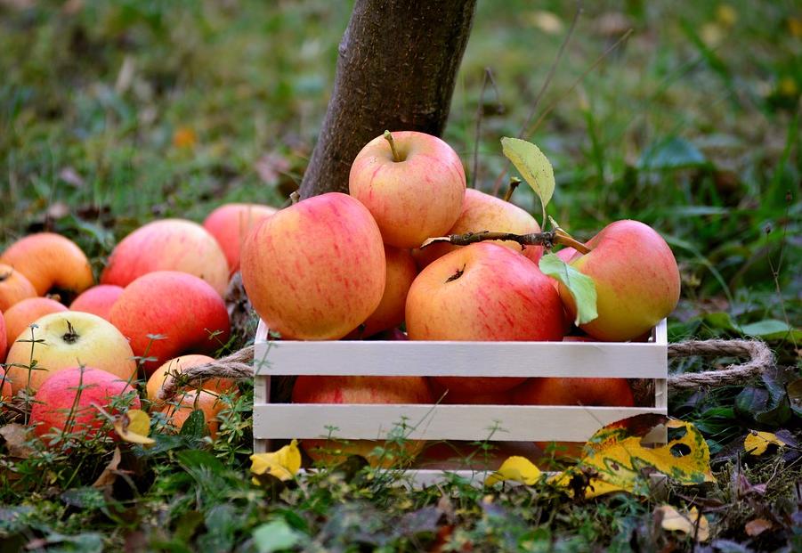 fruits pommes