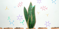 plante purifier air