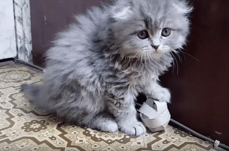 chat jouet fait maison