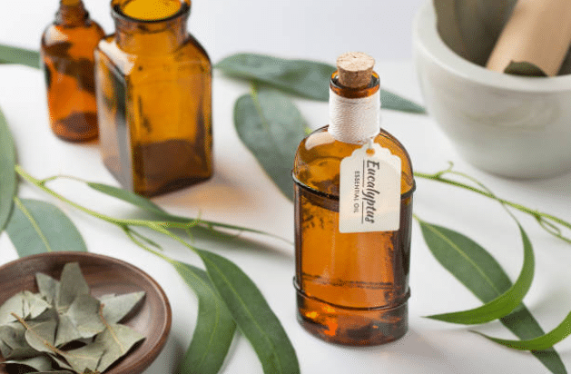 eucalyptus feuilles huile essentielle