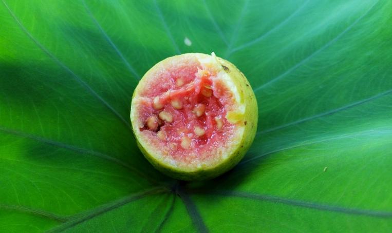 La goyave, l'un des fruits les plus riches en vitamine C
