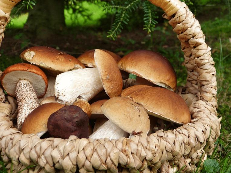 panier en osier champignons