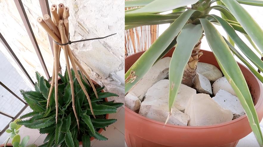 protéger les plantes des chats