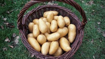 panier à pommes de terre