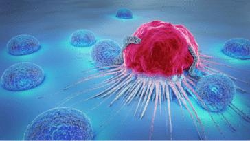cancer cellules cancéreuses lymphocites