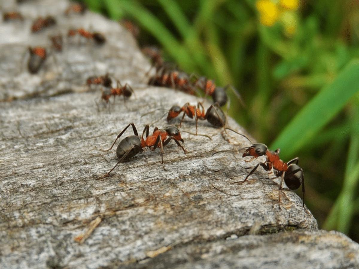 Eloigner Les Fourmis Au Jardin comment se débarrasser des fourmis au jardin en 6 répulsifs