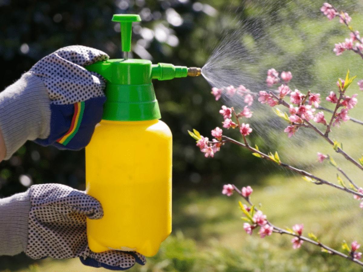 Découvrez 7 recettes simplissimes d'insecticides naturels ...