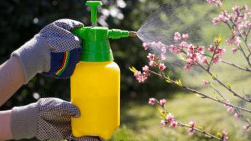 insecticide naturel traitement plantes répulsif