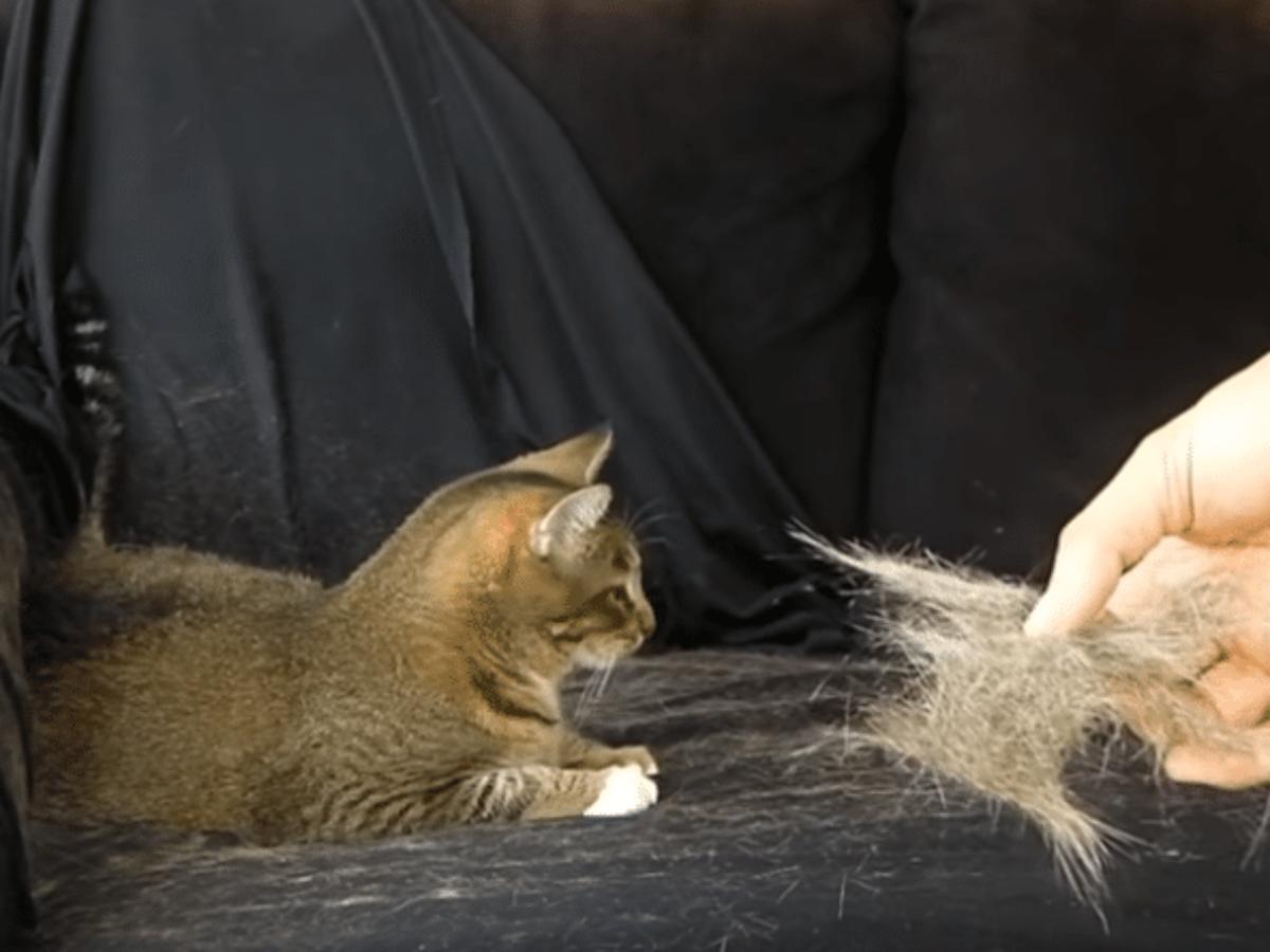Plaid Anti Poil De Chat des astuces incontournables pour se débarrasser des poils de chat à tout  jamais