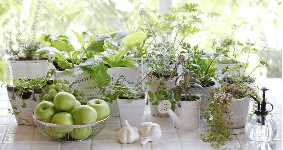 herbes aromatiques pots intérieur