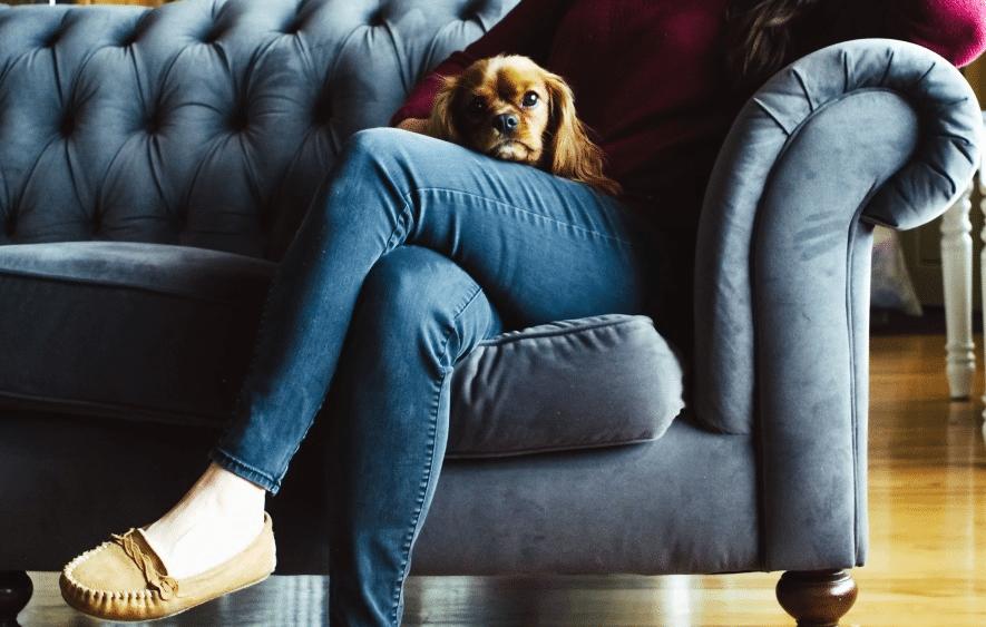 canapé en tissu velouté chien