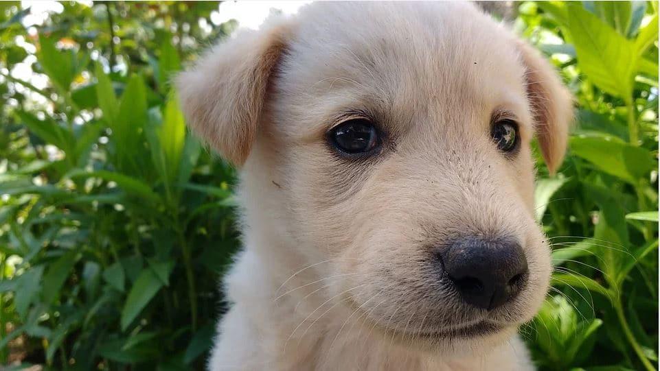 chiot chien trop mignon
