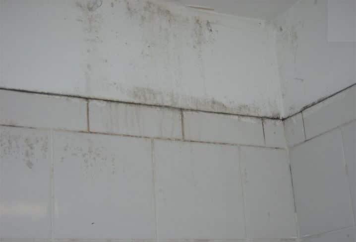 5 Astuces Nettoyage Contre Les Moisissures Dans La Salle De Bain