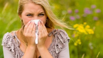 rhume des foins rhinite allergique saisonnière