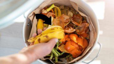 épluchures fruits légumes restes alimentaires