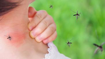 moustiques piqûre