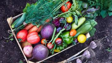 potager légumes