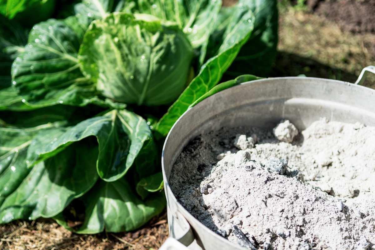 cendre cendres jardinage jardin engrais