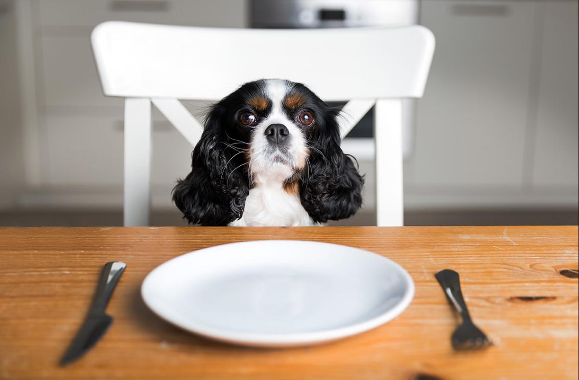 chien restes de table assiette à table