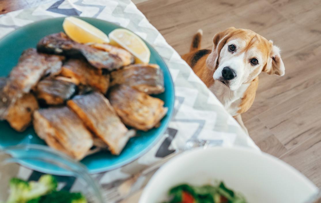 chien restes de table assiette quémande