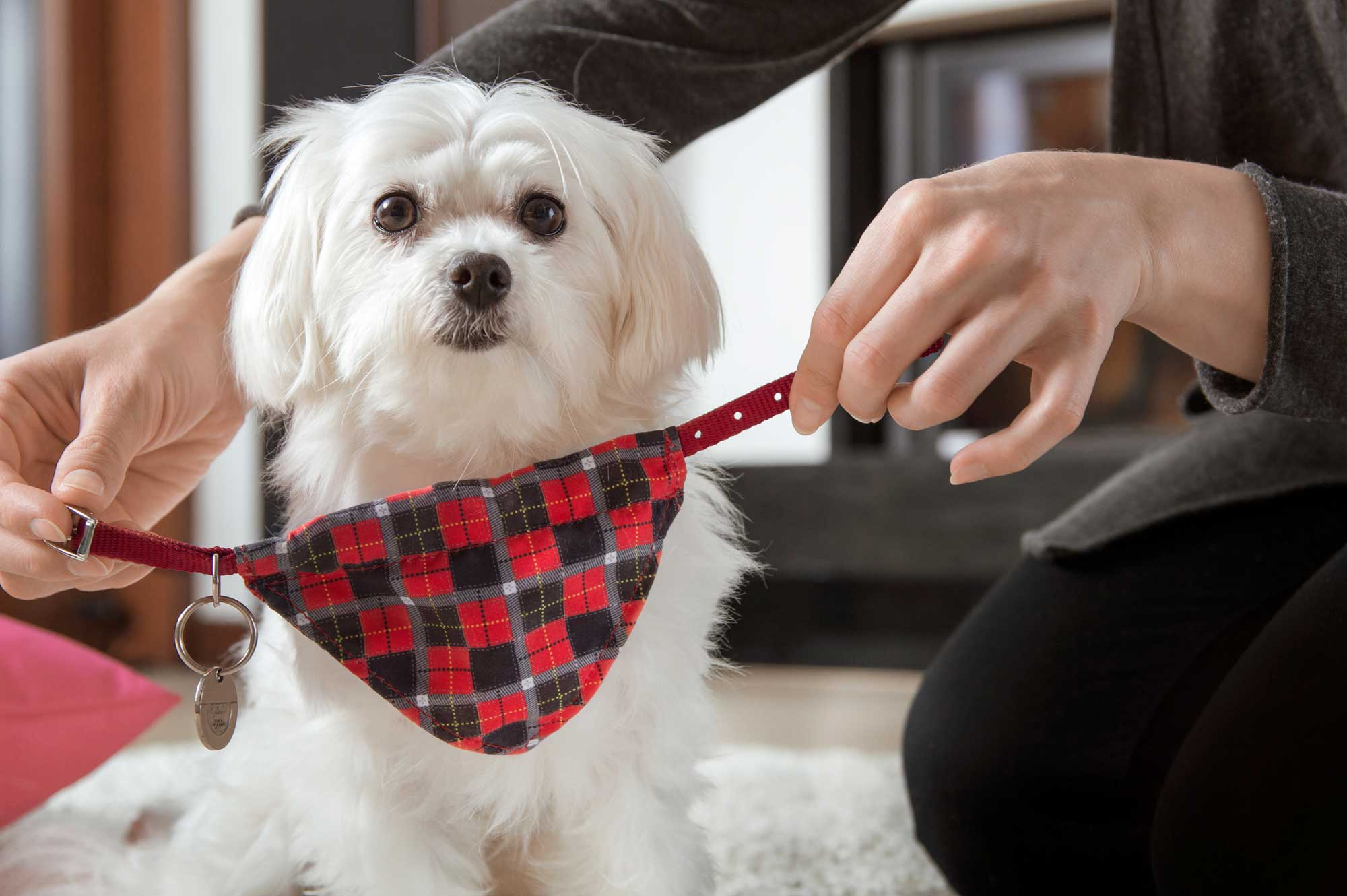 chien foulard contre les puces
