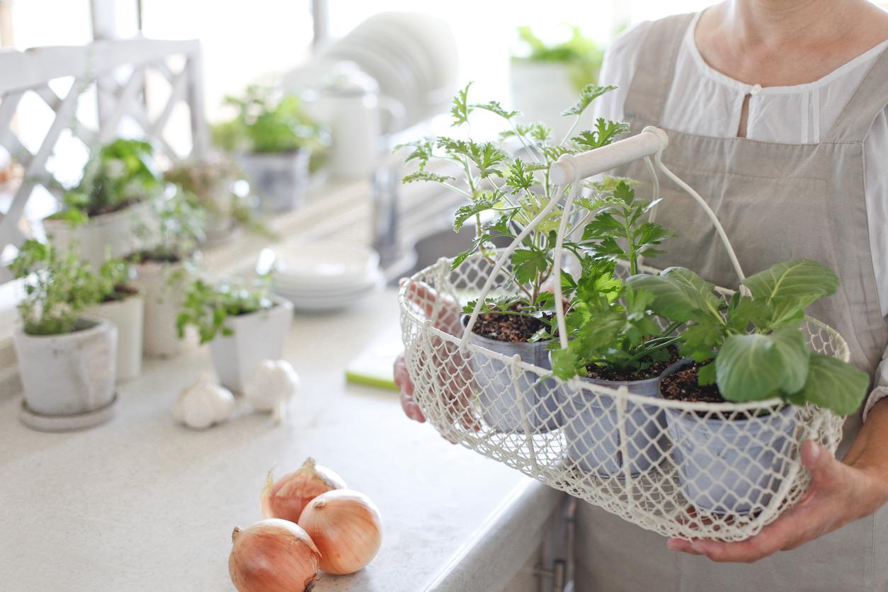 plantes cuisine