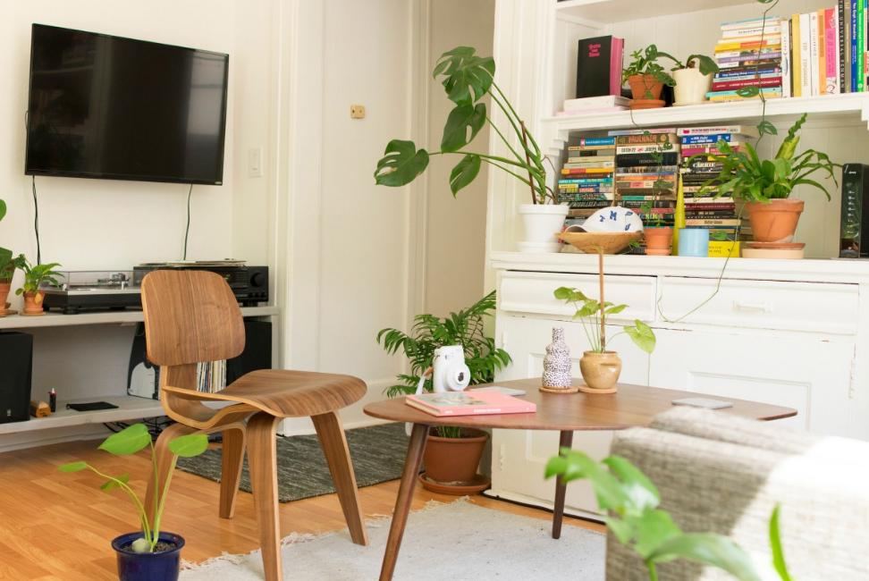 plantes pièce à vivre salon