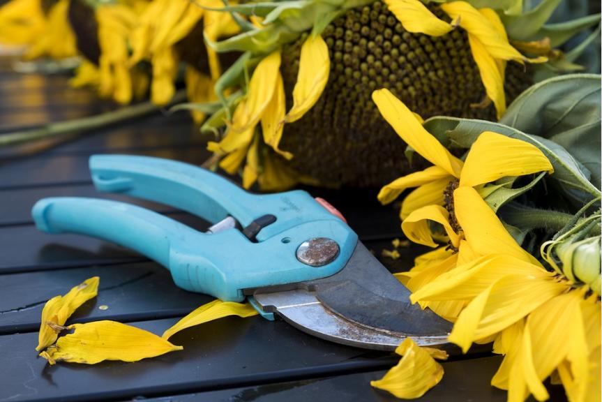 sécateur outil de jardin jardinage