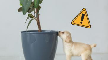 une chien plante toxique