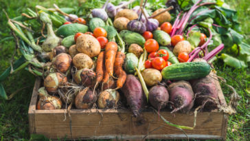 légumes faciles du potager