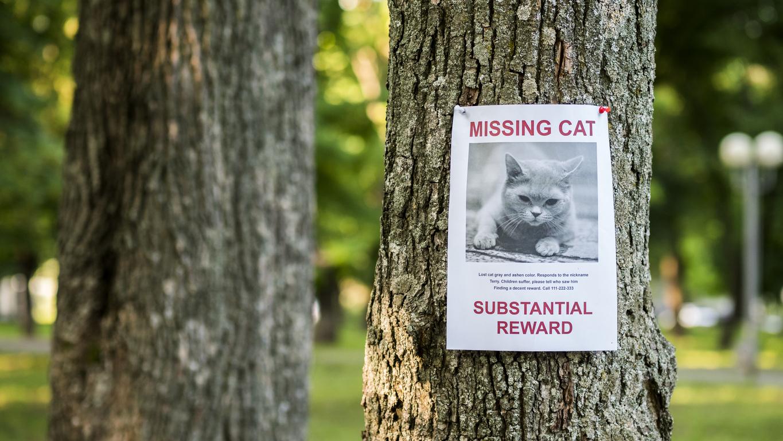 chat perdu affiche affichette
