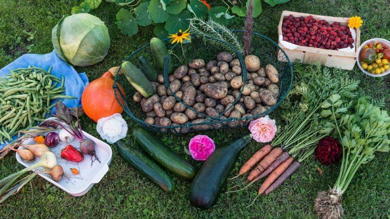 légumes du jardin potager