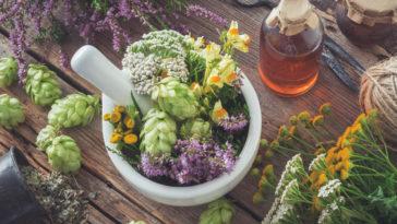 plantes médicinales santé