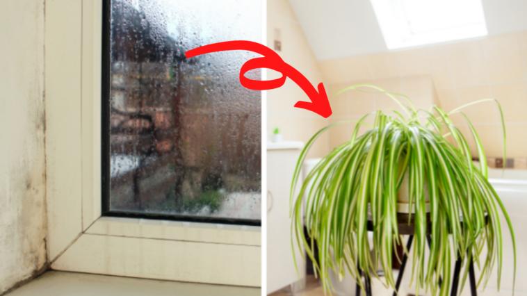 plantes-humidité-maison-salle-de-bain-cuisine
